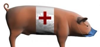 Профилактика свиного гриппа в 2016 году