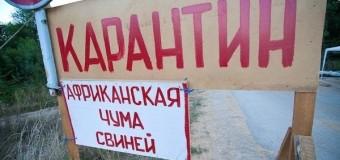 Африканская чума свиней в Крыму в 2016 году — введен режим ЧС