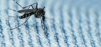 Вирус Зика, последние новости: ВОЗ считает, что вирус может расширить свою географию