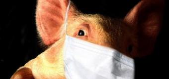Как отличить обычный грипп от свиного?