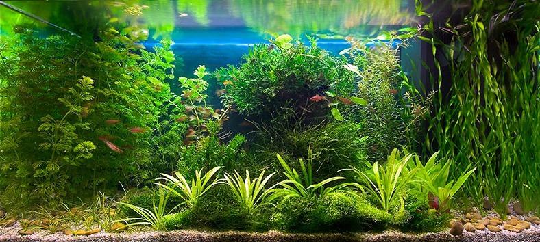 Фото 1 из альбома втроенные аквариумы