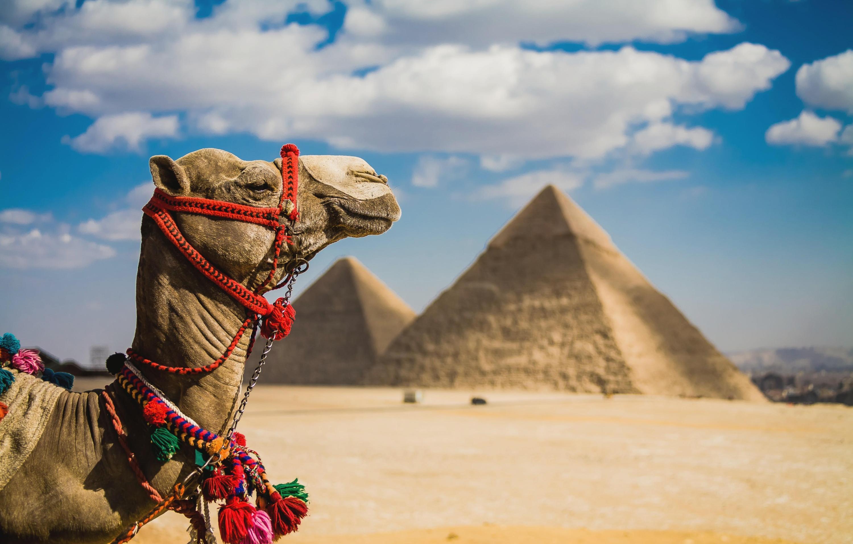 Отдых в Египте отзывы