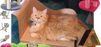 Критерии выбора фурнитуры для кошек и собак