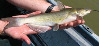 Из чего состоит современная рыбалка