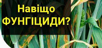 Фунгіциди: використання препаратів допоможе зібрати високий урожай