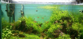 Домашние питомцы. Товары для аквариума, аквариумистика